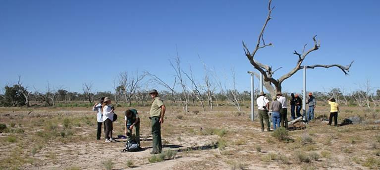 Sturt's tree walk Trail Hiking Australia