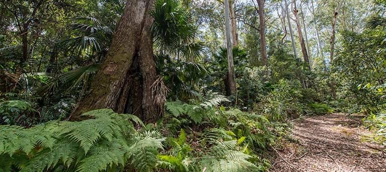 Sugar Creek trail Trail Hiking Australia