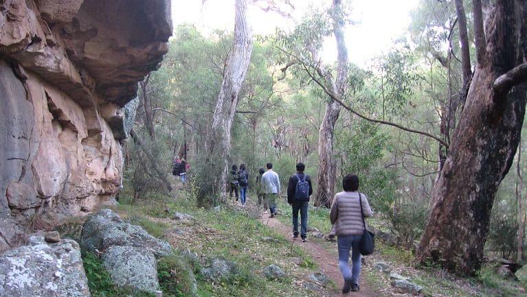 The Drip walking track Trail Hiking Australia