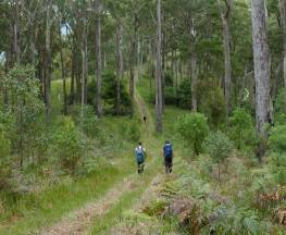The Green Gully track Trail Hiking Australia
