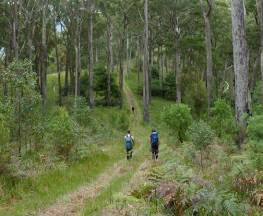 The Green Gully track Trail Hiking Australia