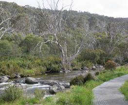 Thredbo River track Trail Hiking Australia
