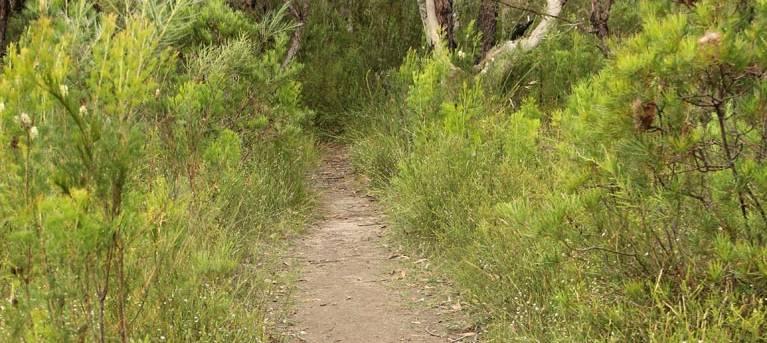 Three Views walking track Trail Hiking Australia