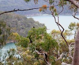 Topham walking track Trail Hiking Australia