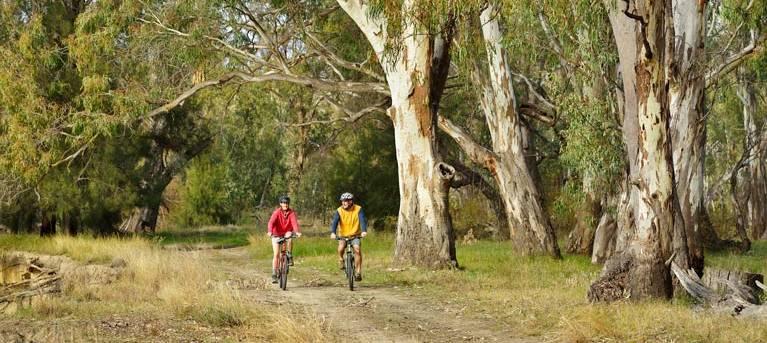 Turkey Flat trail Trail Hiking Australia