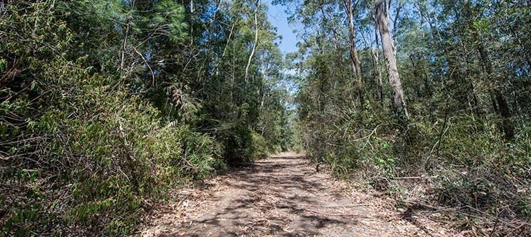 Turners walking track Trail Hiking Australia