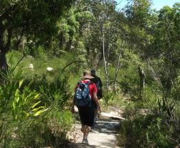 Uloola walking track Trail Hiking Australia
