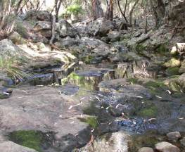 Waa Gorge walking track Trail Hiking Australia