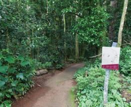 Walk with the Birds boardwalk Trail Hiking Australia