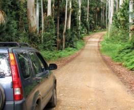 Wallingat Forest drive Trail Hiking Australia