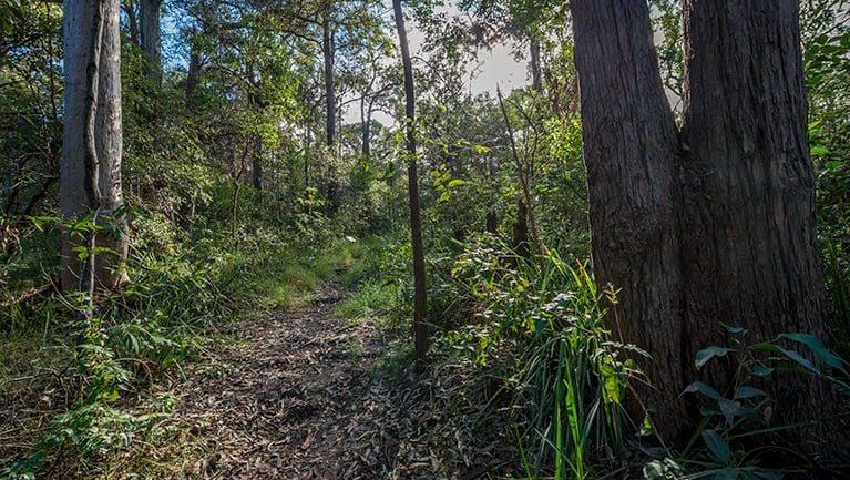Wallumatta loop trail Trail Hiking Australia