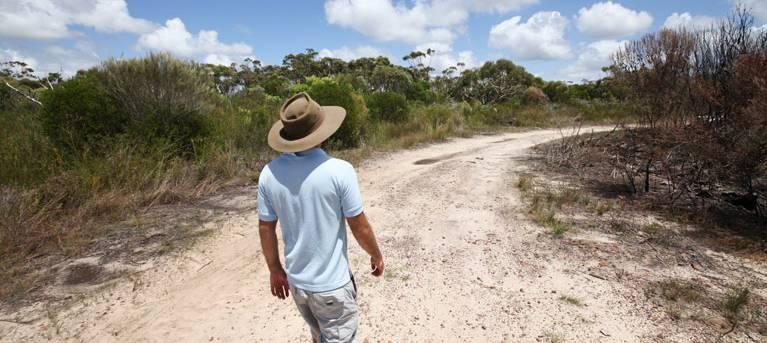 Waratah walking track Trail Hiking Australia