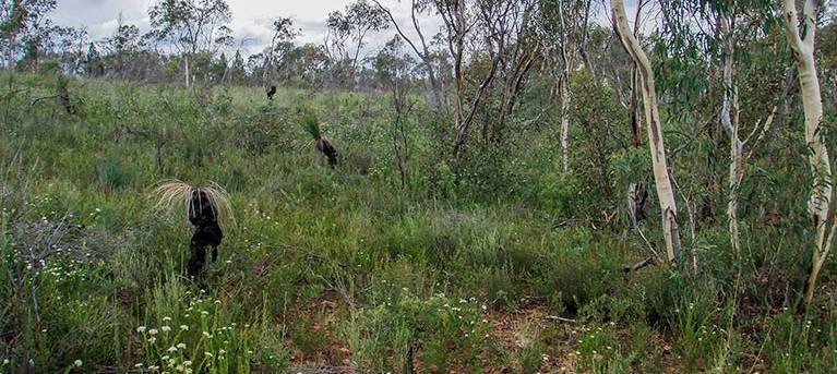 Weddin Gap to Black Spring loop trail Trail Hiking Australia