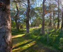 Wingecarribee River walking track Trail Hiking Australia