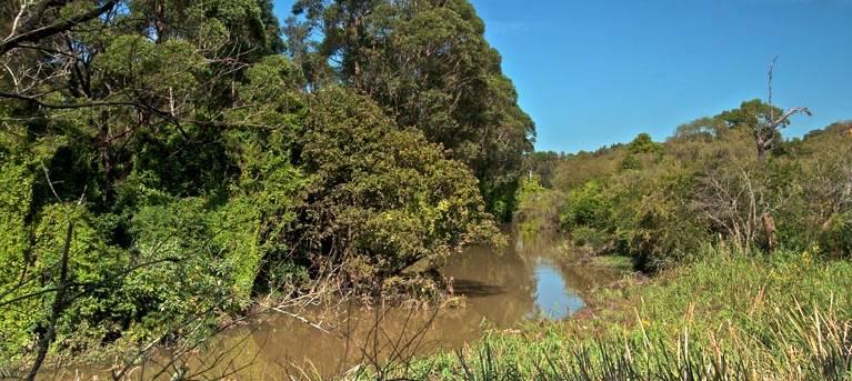Wolli Creek walking track Trail Hiking Australia