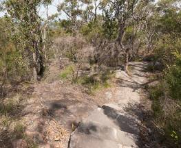 Wondabyne to Patonga walking track Trail Hiking Australia