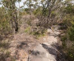 Wondabyne to Patonga walking track Trail Hiking Australia