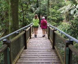 Wonga walk Trail Hiking Australia