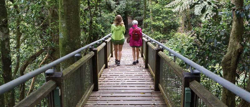 Wonga walk Trail Hiking Australia