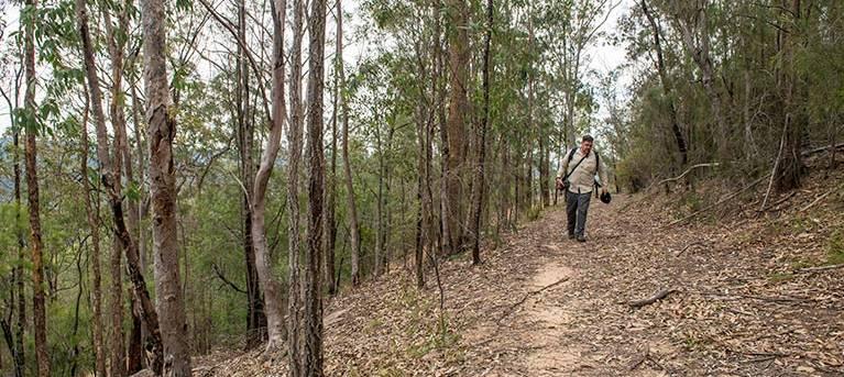 Yango walking track Trail Hiking Australia