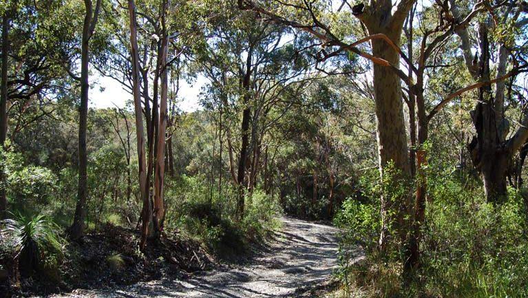 Yondeo trail Trail Hiking Australia