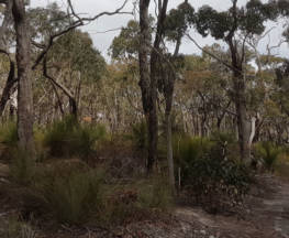The Burchell Trail Trail Hiking Australia