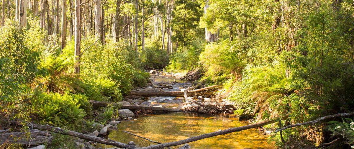 Delatite River Trail