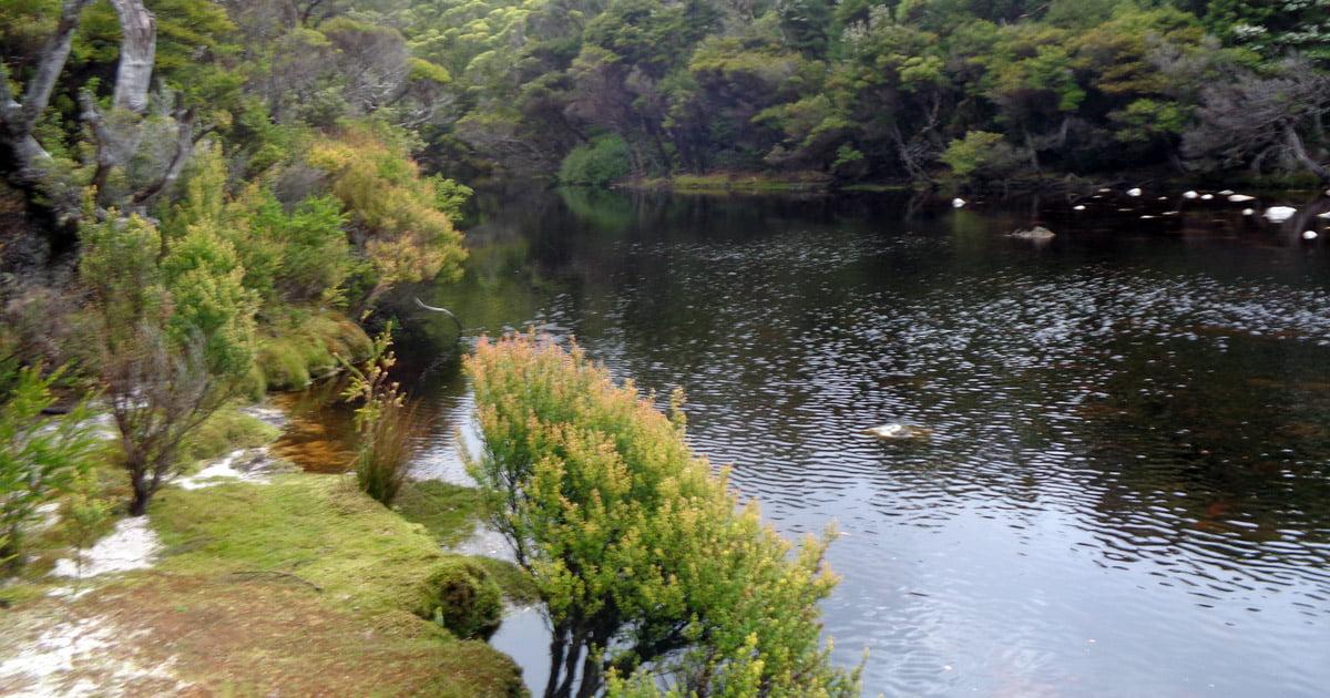 Window Pane Creek